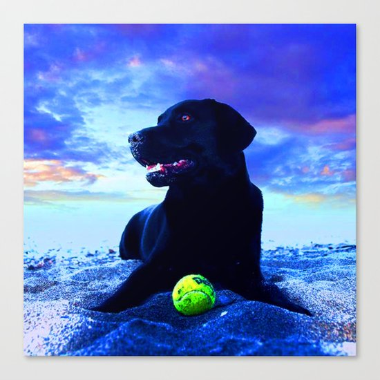 Ziggy Black Labrador Canvas Print