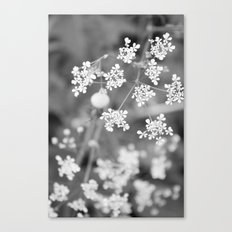 Queen Anne's Lace Wildflowers Canvas Print
