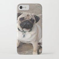 pugs iPhone & iPod Cases featuring Pugs by JordynC
