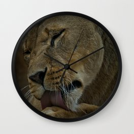 Lioness Licking Her Paw Wall Clock