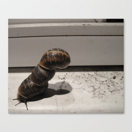 Snail Tower Canvas Print