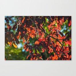 Duo-Dual Canvas Print