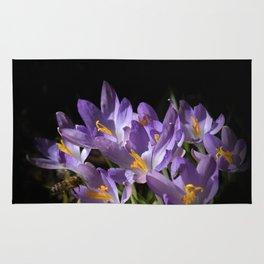lilac crocus on black Rug