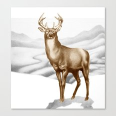 White-tailed Stag 2 Canvas Print