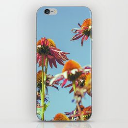 Coneflowers Reaching Skyward iPhone Skin
