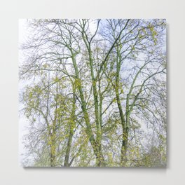 Park with big old trees Metal Print