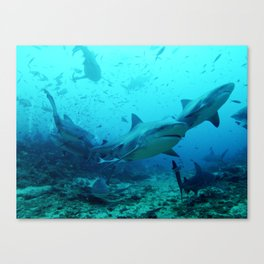 Bull Sharks Canvas Print
