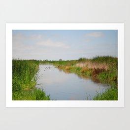 Ducks in the Creek Art Print
