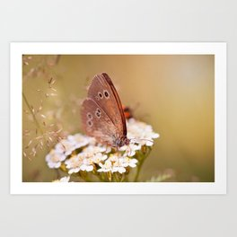 Ringlet brown butterfly Art Print