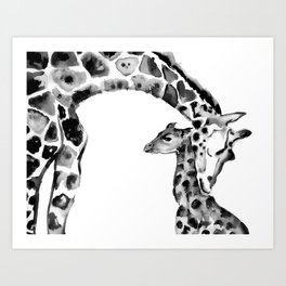 Black and white giraffes Art Print