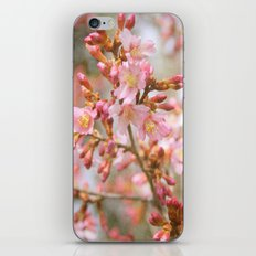 Blossom in the Spring time and fall in love iPhone & iPod Skin