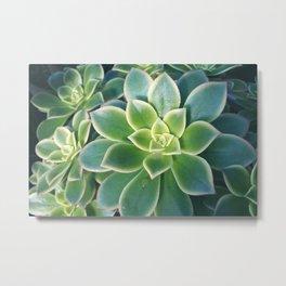 Succulent Plants - Nature Photography Metal Print