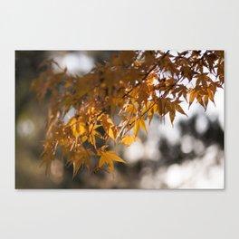 Autumnlights - Gold marple leaves at sparkling backlight Canvas Print