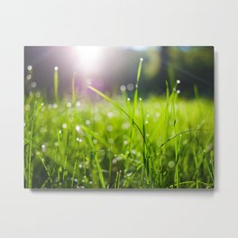 Dew drops in the morning Metal Print