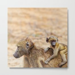 Cute monkey baby and mother Metal Print