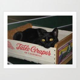Crated Black Cat Art Print