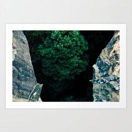 The Forest Below Art Print