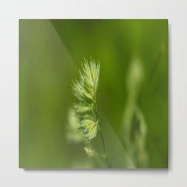 Green Plant Metal Print