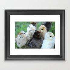 Baby Chicks  Framed Art Print