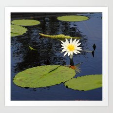 white lily flower Art Print