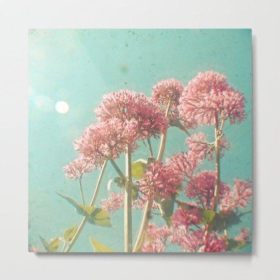 Pink Milkweed Metal Print