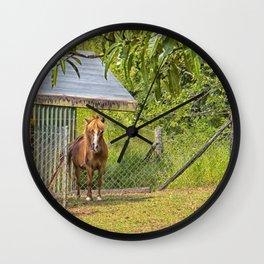 Portrait of a miniature horse mare Wall Clock