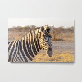 Lone Zebra - Head only, landscape Metal Print