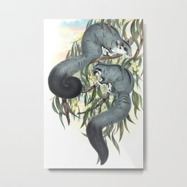 Sugar Glider in the forest of Australia and USA Metal Print
