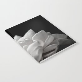 Floral Nature Photography - Delicate Rose with Water Droplets - Black and White Notebook