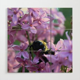 Busy Bee in Lilac Art Photography Wood Wall Art