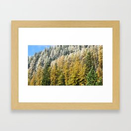 The Forest Of Colours Framed Art Print