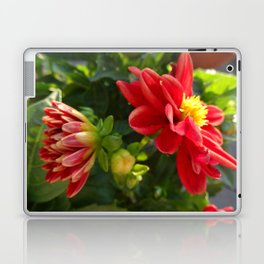 Red Dahlia Dahlietta Laptop & iPad Skin