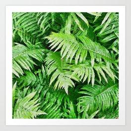 Ferns. Art Print