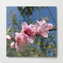 Close Up Peach Tree Blossom Against Blue Sky Metal Print