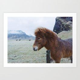 Brown Horse in Iceland Art Print