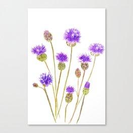 purple thorny wildflower Canvas Print