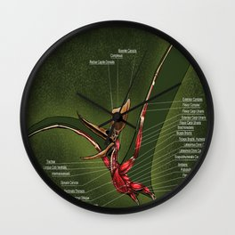 Male Pteranodon Sternbergi Muscles Wall Clock