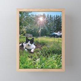 cat cow Framed Mini Art Print