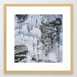 Birch bark 2 Framed Art Print