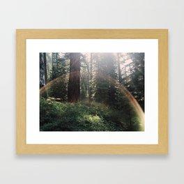 Fairytale Forest - Yosemite Framed Art Print