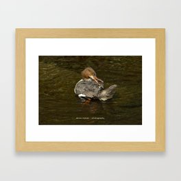 Goosander Framed Art Print