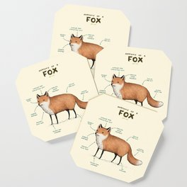 Anatomy of a Fox Coaster