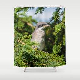 Fledgling Loggerhead Shrike Shower Curtain