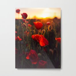 poppy feild Metal Print