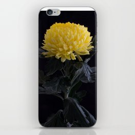Yellow Chrysanthemum iPhone Skin