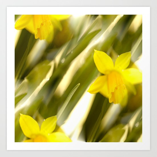Spring atmosphere with yellow narcissus Art Print