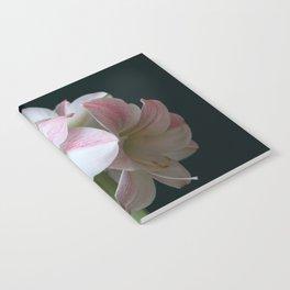 The Amaryllis Notebook