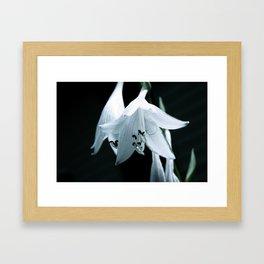 Hosta Flower Framed Art Print
