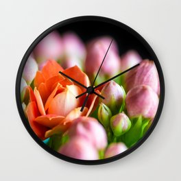 Orange Kalanchoe flower opening standing out from pink buds macro Wall Clock