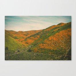 California Poppies 040 Canvas Print